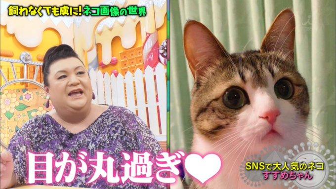 猫にメロメロのマツコ