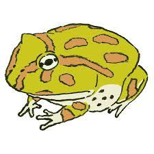 ツノガエルのイラスト